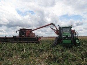 Alroy CTF harvest